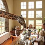 Giraffe Manor in Nairobi, Kenya – A stay in the urban wild with giraffe